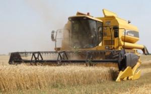 Forege grain Barley