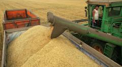 Barley, grain in Ukraine