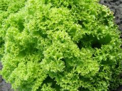 Salad bars