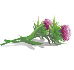 Thistle oil from the producer Andezit of TLD