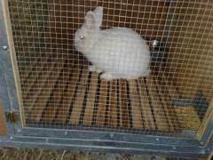 Equipment for cultivation of rabbits