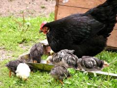 Добавки кормовые для животноводства по Тернопольской области