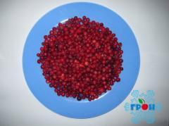 Cranberry (1st class) frozen