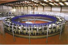 Milking ROUNDABOUT hall, milking machines. Milking