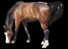 Комбикорм для лошадей. Украина, БКЗ, ООО.