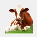 Комбикорм для сельскохозяйственных животных