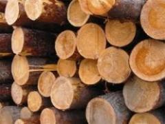 Дрова колотые, резаные твердых пород дерева