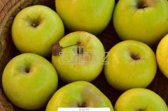 Яблоки сорта Гранни смит поставки оптом 200 тонн.