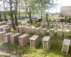 пчелиные пакеты