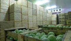 Холодильное Оборудование для Овощей Грибов и