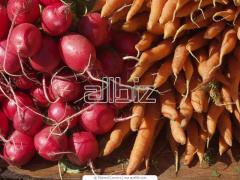 Выращивание овощей и бахчевых культур, корнеплодов