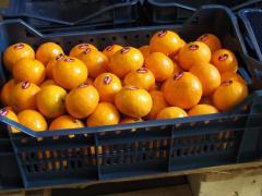 Tangerines fresh
