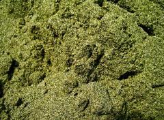 Пісок зелений