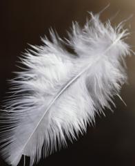 Пух и перья в смеси различного содержания пуха и