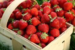 Клубника: свежие ягоды и рассада ранний сорт:
