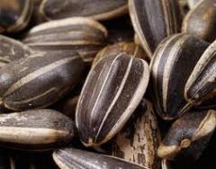 Семена масличных культур