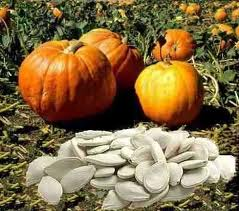 "Sunflower seeds are pumpkin, ""Ukrainian polycarpous"", ""Serovolzhskaya"", ""Bulgarian"". Ukraine to buy. price. Export."