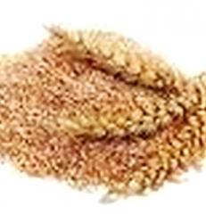 Отруби пшеничные, жом с доставкой