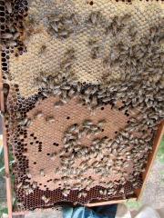 """Пчелопакет 4х рамочный """"Украинский"""