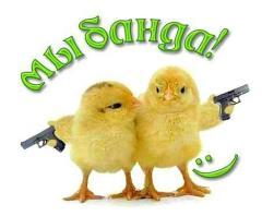 Цыплят яично и мясо - яичных пород