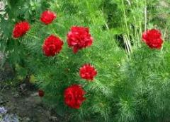 Пакетированные семена цветочных культур