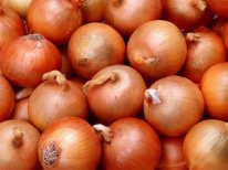 I will sell onions wholesale