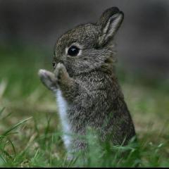 Комбикорм  для кроликов (спец)