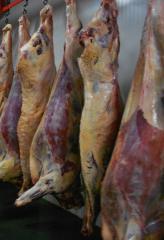 Beef 1 kat. in half carcasses (cow) frozen