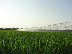 Cars are irrigating
