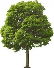 Environmentally friendly wood