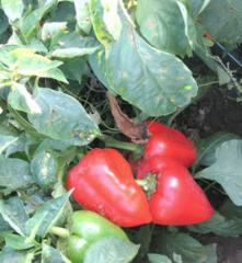 Средства защиты растений от болезней