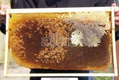 Framework for beehives