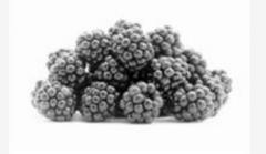 The blackberry frozen. The BLACKBERRY FROZEN FOR