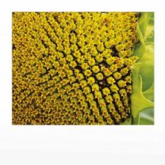 Środki ochrony roślin chemiczne