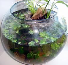 Аквариуми кръгли