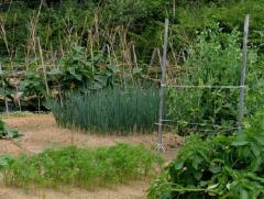 Средства для защиты культурных растений от