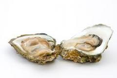 Financial De Claire No. 2 oyster - specify the