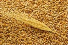 Оптовая торговля зерном, необработанным табаком,