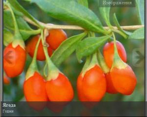 Godzha berries, godzha saplings, Kherson