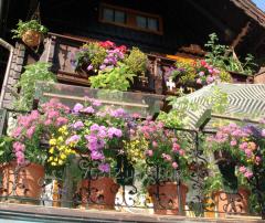Цветы, озеленение летних площадок ресторанов,