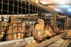 Polnoratsionny forages for quails. Wholesale.