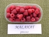 Malahat raspberry saplings
