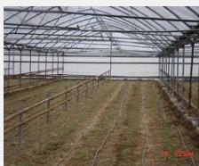 Systems of drop watering for greenhouses to buy