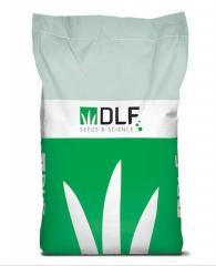 Газонная трава Краина (KRAJINA) DLF Trifolium 20