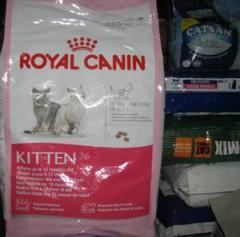 Dry feed for kittens Kitten 36 Royal Kanin Royal