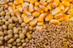 Био инокулянт для зерновых (кукурузы, пшеницы),