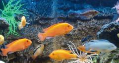 Aquariums panoramic production sale delivery