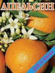 Concentrate for bathtubs Orange 500 gr