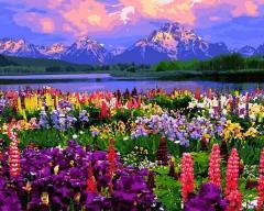 Картина по номерам Национальный парк Гранд-Титон