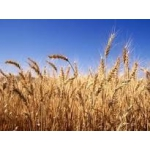 Let's buy wheat with protein 10,5 above